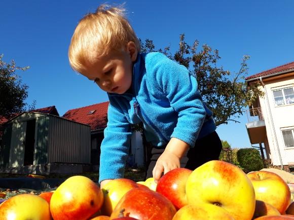 Jablečný král