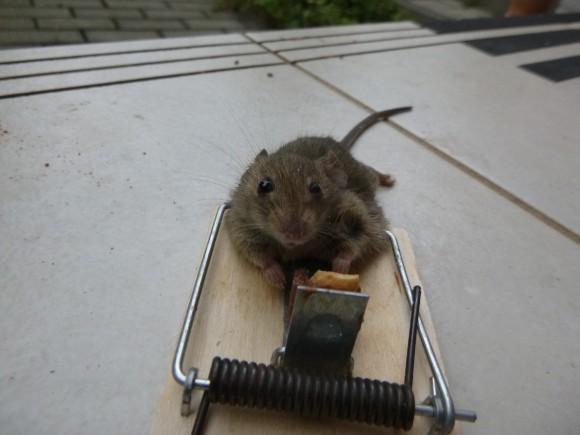 Úspěšný lov myši